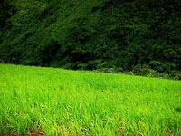 Górski ryż......czyli trekking w Kalaw