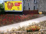 kwiaty w Aberdeen