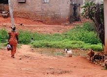 wszechobecne kozy