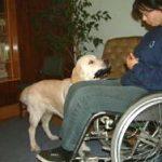 Człowiek i pies – Stowarzyszenie ALTERI
