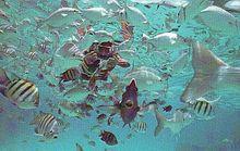 Rafa koralowa - Cozumel