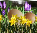 Jaja marmurkowe i… coś zielonego