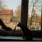 Jak umyć okno w towarzystwie kota