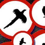 Ptasia grypa