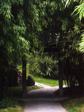 Bambusowy Zagajnik, Park Zhongshan, Pekin