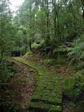 Porośnięte mchem szlaki w Yangmingshan