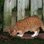 Jak skutecznie wytruć sąsiedzkie koty?