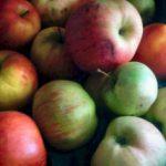 Jak owinąć jabłko w bawełnę