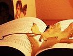 Jak polubić listopad. 30 sprawdzonych sposobów