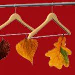 Zenon w jesieni